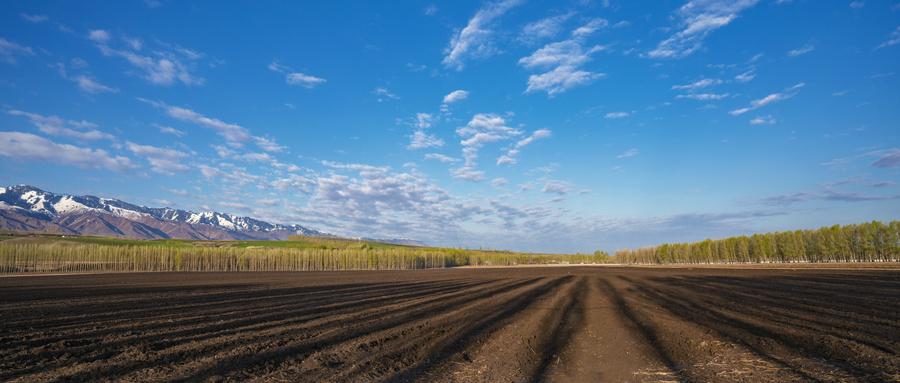 耕地占用税分录